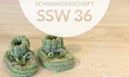 Schwangerschaftsupdate – SSW 36
